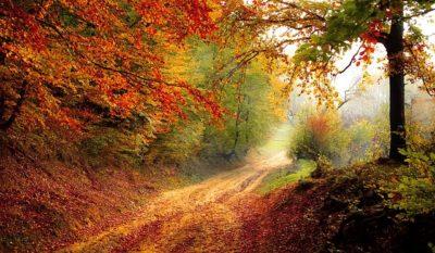saison, automne, plaisir